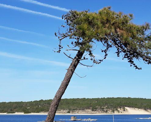 A flexibilidade na natureza como metáfora da flexibilidade mental